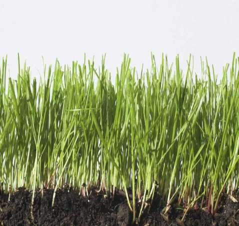 Grass & Forage Seeds
